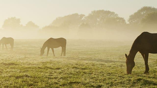 Pferde auf eine Wiese vor einem Angriff durch einen Pferdeschlitzer